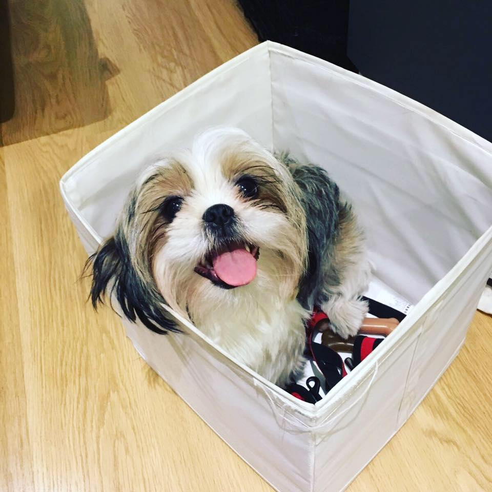 Bette the dog in a box